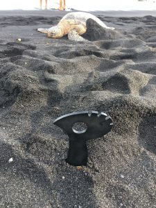 Hawaii... guarding the laying of turtle eggs